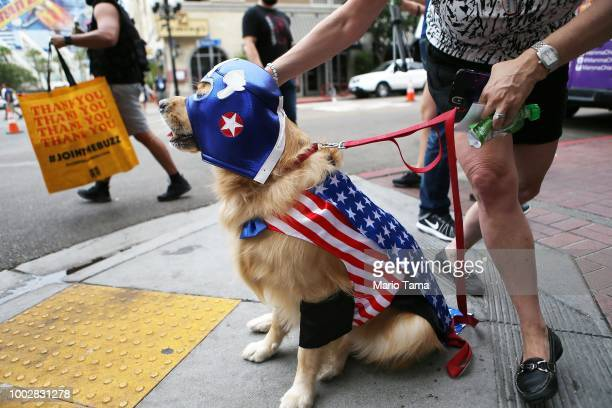 A dog is dressed as Captain America outside outside ComicCon on July 20 2018 at the San Diego Convention Center in San Diego California More than...