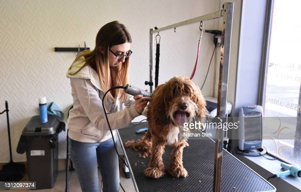 Dog is groomed at Paws For Thought Dog Grooming on April 12, 2021 in Leek, England. England has taken a significant step in easing its lockdown...