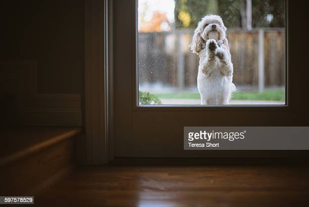 Dog Is Jumping on Door to be let insdie