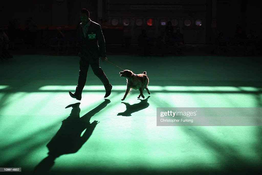 A dog is led by its handler in the parade ring on the first day of the annual Crufts dog show for the Gun Dogs section at the National Exhibition Centre on March 10, 2011 in Birmingham, England. During this year's four-day competition nearly 22,000 dogs and their owners will vie for a variety of accolades, ultimately seeking the coveted 'Best In Show'.