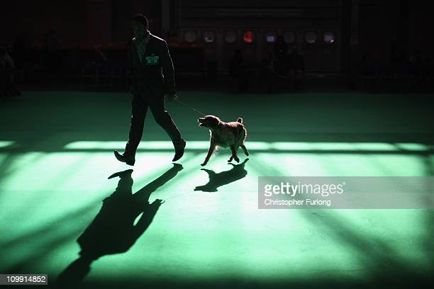 Dog is led by its handler in the parade ring on the first day of the annual Crufts dog show for the Gun Dogs section at the National Exhibition...