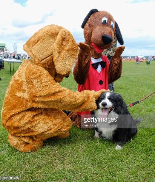 Dog is patted by entertainers in dog costumes during events at the Great North Dog Walk on June 4, 2017 in South Shields, England. Founded in 1990 by...