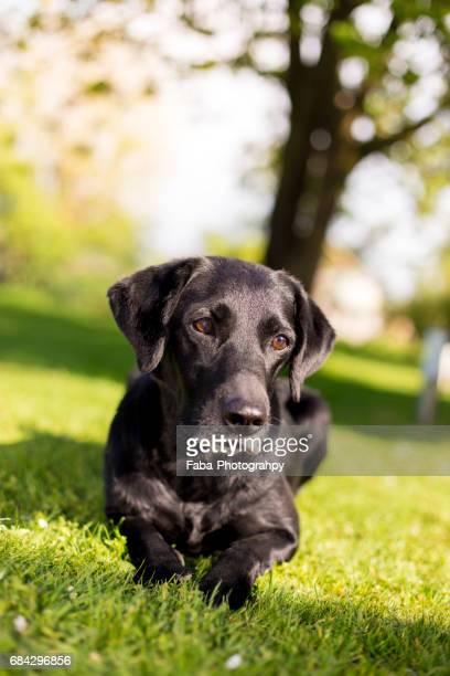 dog is relaxing - niedlich stockfoto's en -beelden