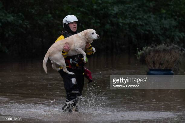 A dog is rescued from a property on Oxford Street on February 16 2020 in Nantgarw Wales The Met Office have issued a red weather warning for rain in...