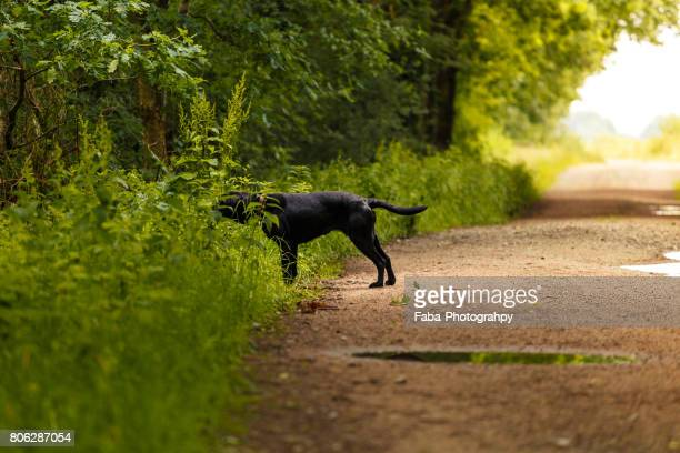 dog is searching - beschaulichkeit stock pictures, royalty-free photos & images