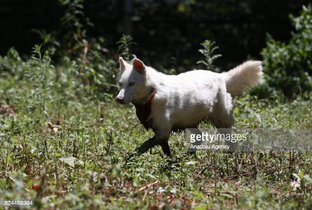 A dog is seen after transferred from Syria to Bursa to receive a medical treatment from veterinarians and animal health care members who works for...