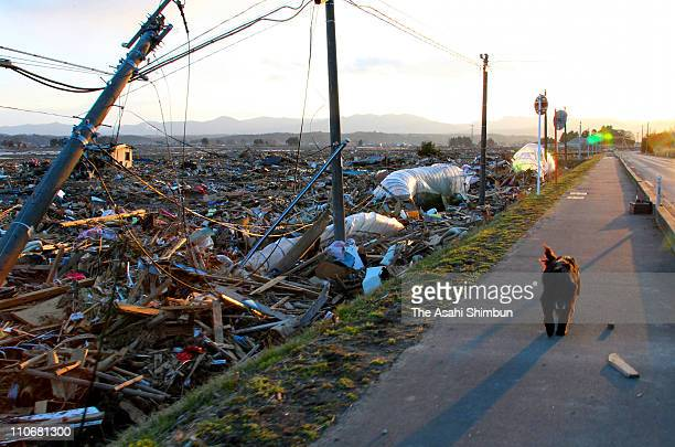 A dog is seen amongst rubble on March 23 2011 in Minamisoma Fukushima Japan Minamisoma is situated within 30km of the Fukushima Daiichi Nuclear Power...
