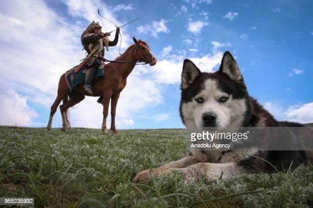 A dog is seen as a Kyrgyz Turk aims his bow in Turkey's eastern city of Van on May 05 2018 Kyrgyz Turks living in Ulupamir village of Van's Ercis...