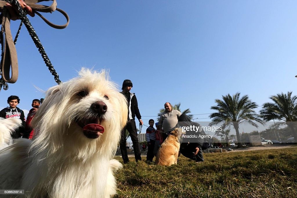 A dog is seen as Palestinian animal lovers host an event with their different breeds of dogs aiming to draw attention to the importance of giving homes to dogs, in the area of al-Katiba in Gaza City, Gaza on February 5, 2016.