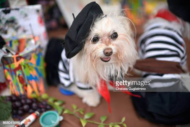 A dog is seen dressed as an artist during the Haute Dog Howl'oween Parade on October 29 2017 in Long Beach California