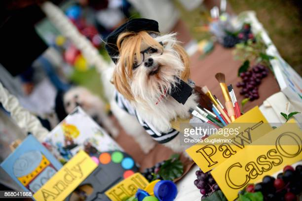 A dog is seen dressed as PawCasso during the Haute Dog Howl'oween Parade on October 29 2017 in Long Beach California