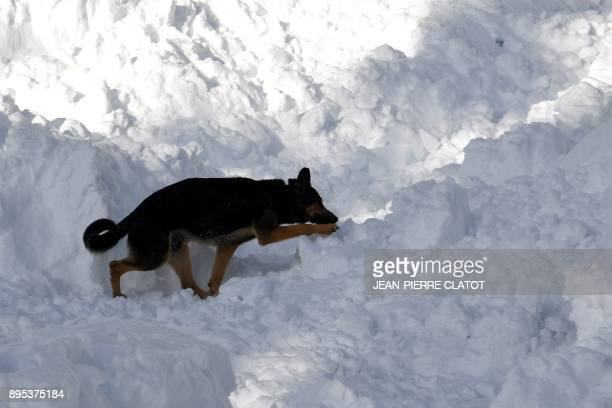 A dog is seen during a mock rescue operation as part of an avalanche exercice on December 19 2017 in Les Gets / AFP PHOTO / JEANPIERRE CLATOT