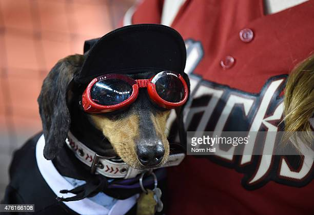 A dog is seen during the Arizona Diamondbacks 'Bark at the Park' event prior to a game against the New York Mets at Chase Field on June 6 2015 in...