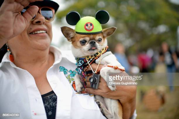 A dog is seen during the Haute Dog Howl'oween Parade on October 29 2017 in Long Beach California