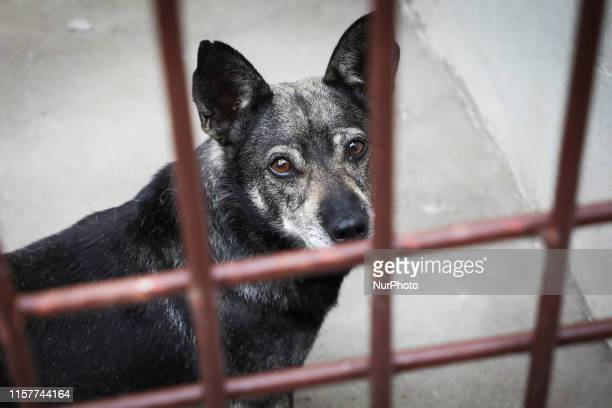 A dog is seen in a cage at The Shelter for Homeless Animals in Krakow Poland on 24 July 2019 The shelter which was created in 1994 has a space for...