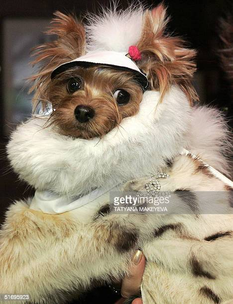 A dog is seen in a winter coat made from bobcat fur during a dog fashion show in Moscow 07 November 2004 The expected price tag for the coat is...