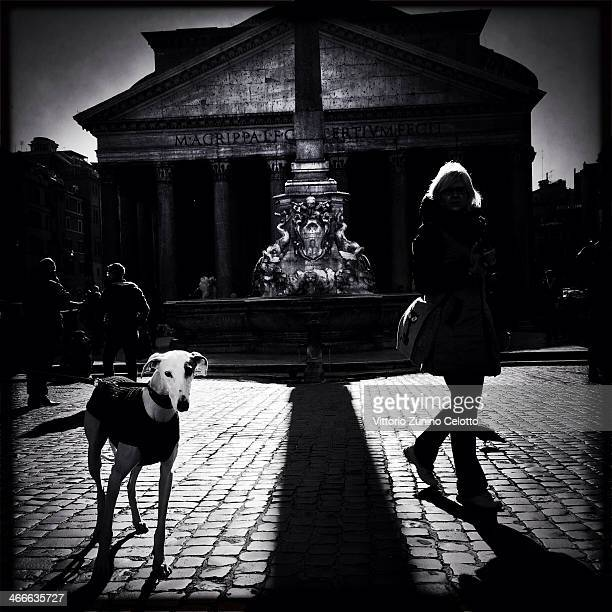 A dog is seen in Piazza della Rotonda on January 26 2014 in Rome Italy