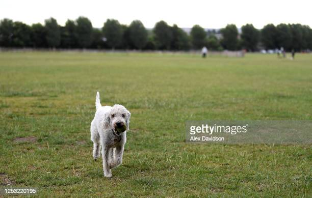 A dog is seen in Wimbledon Park which would normally be full of people camping and queuing on June 29 2020 in Wimbledon England The Wimbledon Tennis...