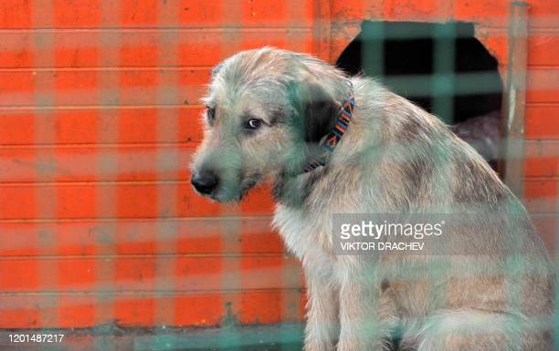 A dog is seen inside its cage at a center for homeless animals in Minsk on February 25 2011 AFP PHOTO / VIKTOR DRACHEV