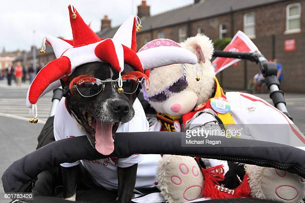A dog is seen outside the gorund during the Premier League match between Liverpool and Leicester City at Anfield on September 10 2016 in Liverpool...