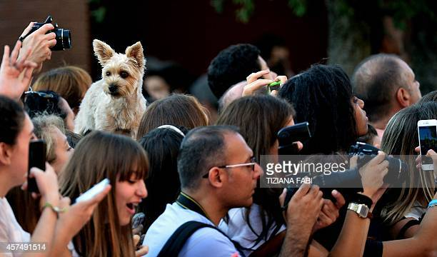 """Dog is seen over the crowd of fans waiting for the arrival of guests before the screening of the movie """"Love, Rosie"""" presented at the Rome Film..."""