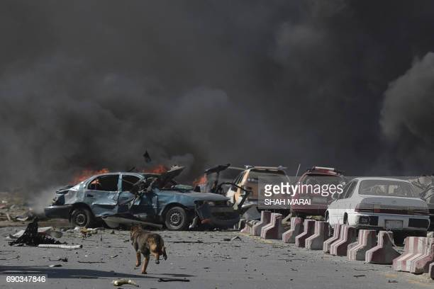 TOPSHOT A dog is seen running at the site of a car bomb attack in Kabul on May 31 2017 At least 40 people were killed or wounded on May 31 as a...
