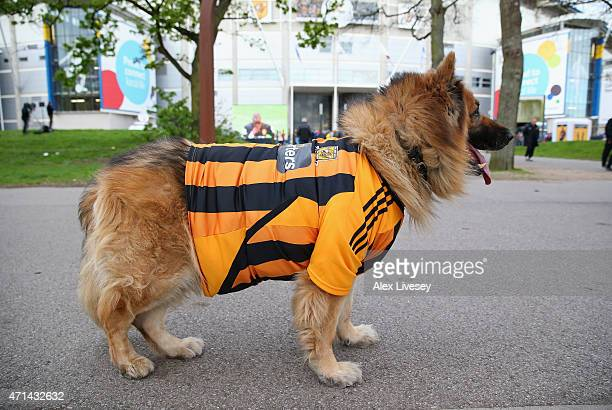 A dog is seen showing it's support for Hull City outside the KC Stadium prior to the Barclays Premier League match between Hull City and Liverpool at...