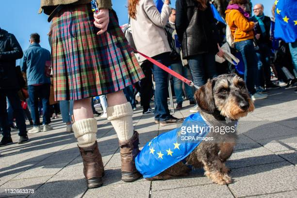 A dog is seen wearing a flag of the EU during the protest A day before the anniversary of the founding Treaty of the European Union citizens and...