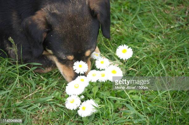 Dog Is Smelling The Flower