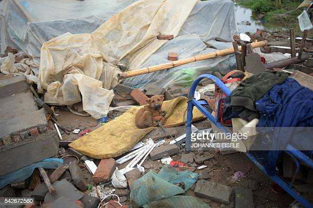 A dog is tied to a bed in the rubble of a destroyed house after a tornado hit the region in Funing in Yancheng in China's Jiangsu province on June 24...