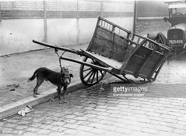 A dog is watching over a pushcart in the absence of his master Photograph Paris Around 1930 [Ein Hund bewacht whrend der Abwesenheit seines Besitzers...