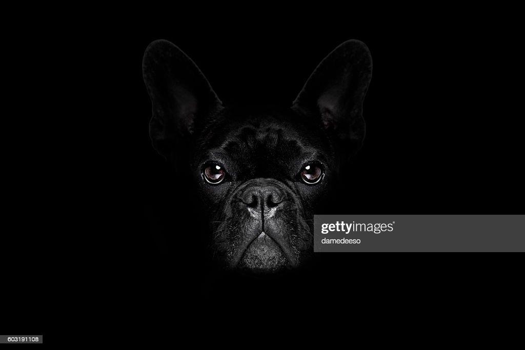 Resultado de imagem para dog black backdrop