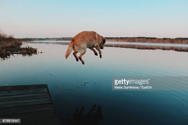 Dog Jumping From Jetty Into Water