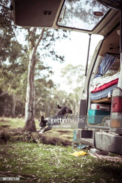 Dog jumping from motor home in forest