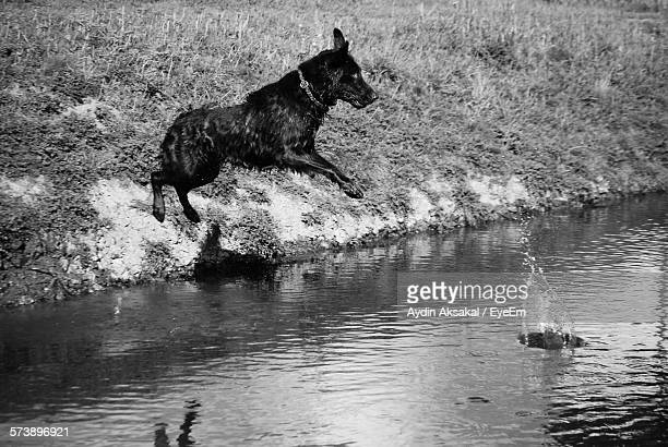 Dog Jumping Into Pond