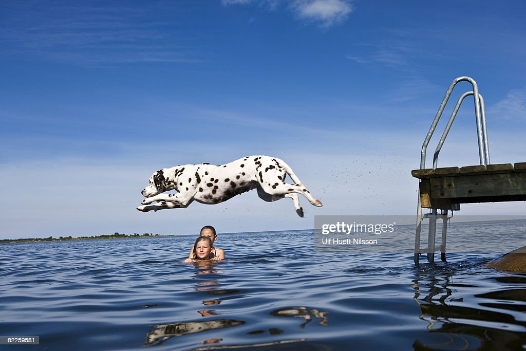 Dog jumping into the water and girls swimming Oland Sweden. : Stock Photo