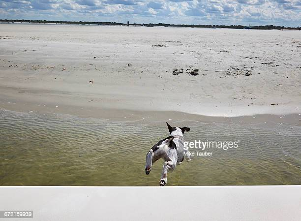 Dog jumping off boat toward beach