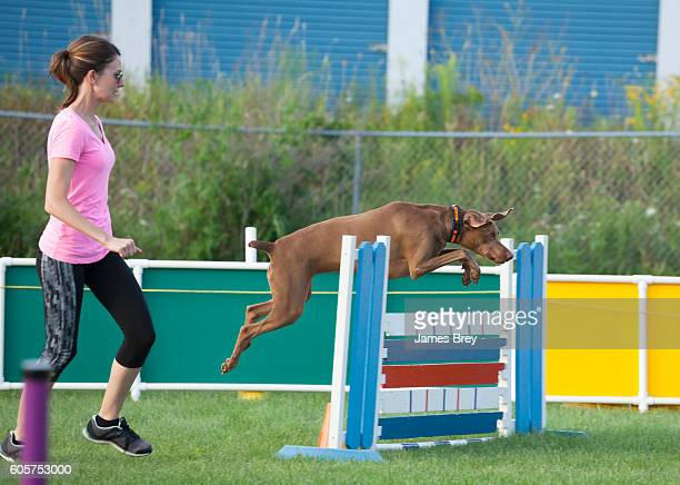 Dog jumping over obstacle in agility competition