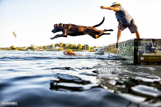 dog jumping - retrieving stock photos and pictures