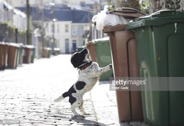 Dog jumping up to outside bin