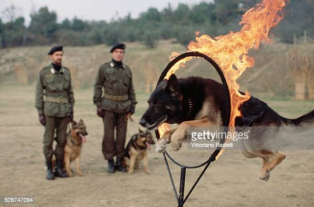 A dog jumps through a flaming hoop during Carabiniere training in Florence Italy