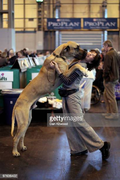 A dog jumps up on his owner on day one of the annual Crufts dog show at the National Exhibition Centre on March 11 2010 in Birmingham England During...