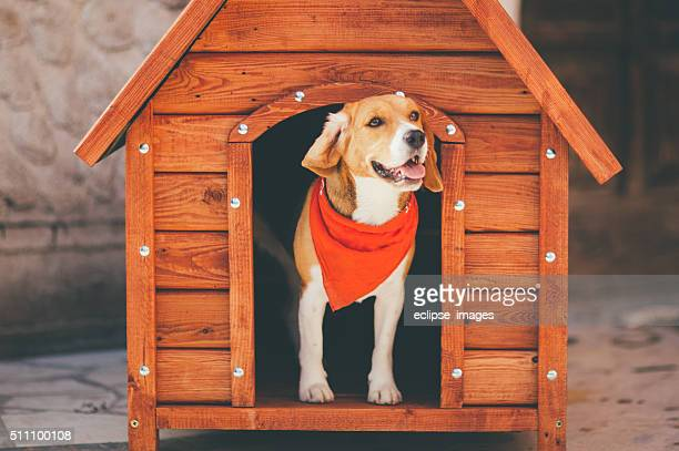 dog kennel - ignoring stock pictures, royalty-free photos & images