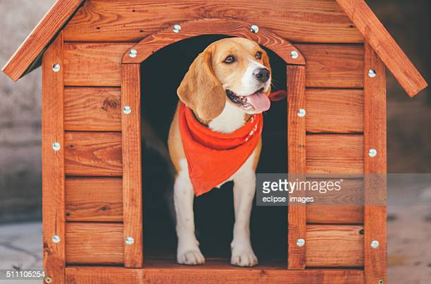 dog kennel - blame stock pictures, royalty-free photos & images