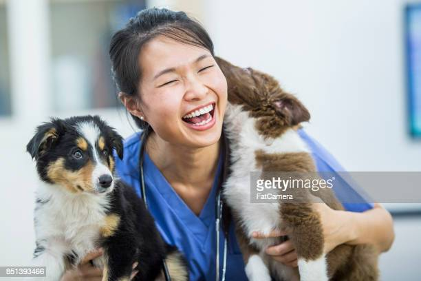 dog kisses - animal hospital stock pictures, royalty-free photos & images