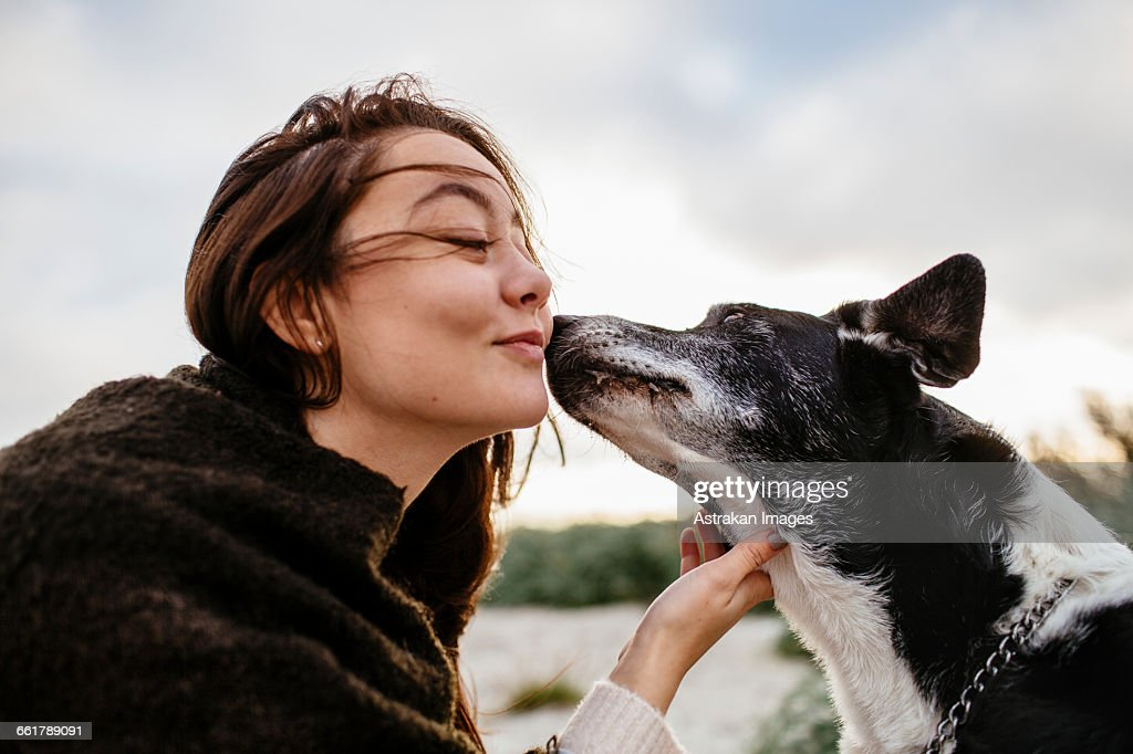 Dog kissing young woman on cheek at beach during sunrise : Stock Photo