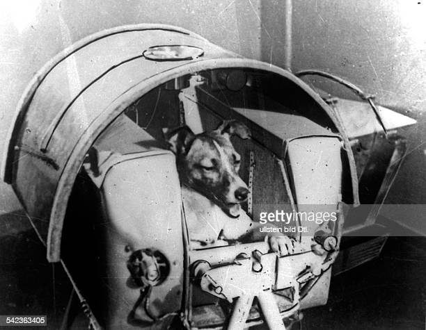 """Dog """"Laika"""" in her cabin shortly before it was installed into Sputnik II"""