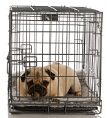 dog laying down in a crate