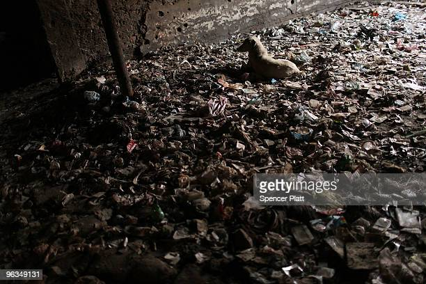 A dog lays down in trash in the destroyed former Russian Cultural Center a notorious drug den in Kabul on February 02 2010 in Kabul Afghanistan As...
