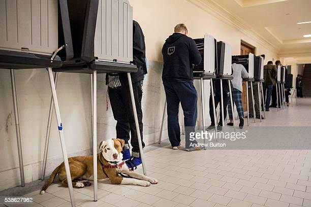 A dog lays on the ground while its owner votes in the California primary on June 7 2016 at City Hall in San Francisco California Six states including...